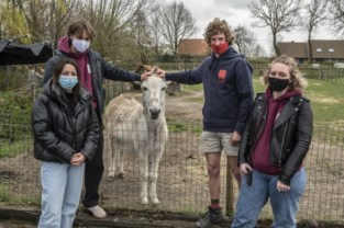 Ezeltje brengt meer dan 1.500 euro op voor vzw Reinerts Licht