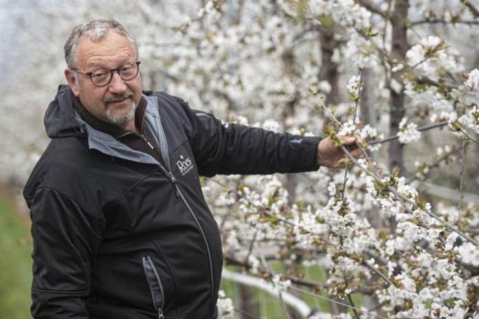 Kempense fruittelers en wijnboeren wachten bang schade van aprilse grillen af