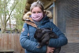 """Konijnenasiel luidt alarmbel: """"Van één naar 43 konijnen in een jaar tijd"""""""