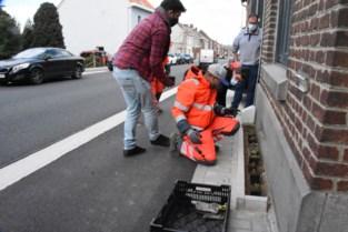 """Testproject met geveltuintjes maakt van grijze Nijvelsesteenweg groene corridor richting Hallerbos: """"Alle beetjes helpen"""""""