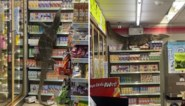 """Hongerige varaan zet supermarkt op stelten: """"Gevaarlijke dieren, vooral als ze kwaad zijn"""""""
