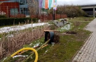 Vijftigtal bomen opnieuw uitgegraven langs Tongersestraat