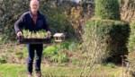 Hoe zorg je in je tuin voor de bloemetjes én de bijtjes? Onze tuinarchitect geeft tips