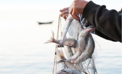 Hierop moet je letten als je vis koopt