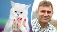 """""""Ze herkennen je stem, ja. Maar dat betekent niet dat ze reageren"""": onze dierendokter over katten en hun 'personeel'"""