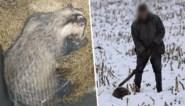 """Man op foto ontkent dat hij (inmiddels gestorven) das sloeg: """"Hij checkte met zijn stok of het beestje nog leefde"""""""