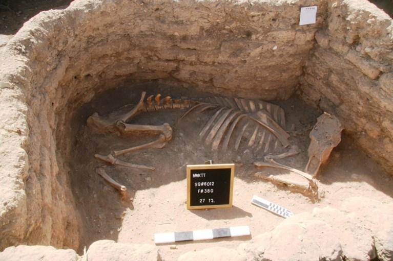 """Egyptische archeologen ontdekken 3.000 jaar oude stad: """"De op één na belangrijkste ontdekking sinds het graf van Toetanchamon"""""""
