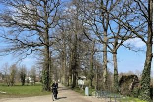 """Noodkreet natuurverenigingen: """"Laat de veteraanbomen op Begijnenvest staan"""""""