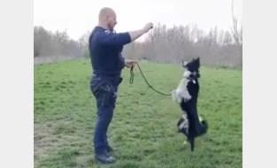 Gentse politie vindt loslopende hond en die kan meer dan zitten en liggen …