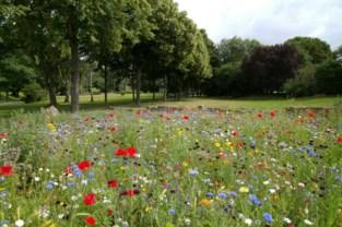 Gemeente deelt gratis zakjes bloemenzaad uit