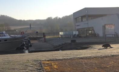 Overijverige aannemer vernielt biotoop van beverfamilie in Kanne