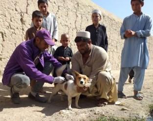 """Edgard & Cooper schenkt 250.000 euro aan goede doelen: """"Onze missie is honden een beter leven geven"""""""