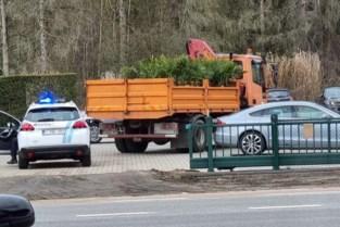 Politie achtervolgt gekochte palmbomen