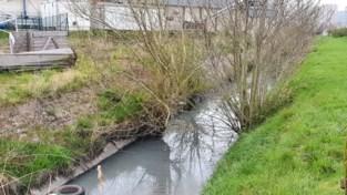 """Watervervuiling wellicht afkomstig van breuk in riolering: """"Beluchting moet vissen nu redden"""""""