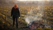 """Derde van Franse wijnproductie """"verloren"""" als gevolg van vorst"""