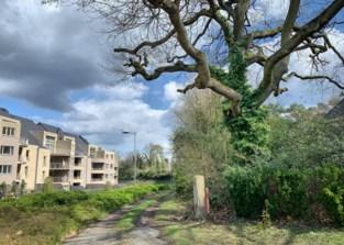 Buurt opnieuw in beroep tegen vier wooncomplexen in Genk-Centrum