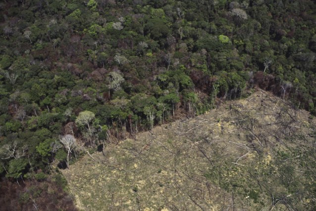 België bij grootste Europese importeurs producten uit ontbossing (WWF)