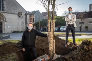 Vier nieuwe bomen nadat aannemer boom had geveld zonder vergunning