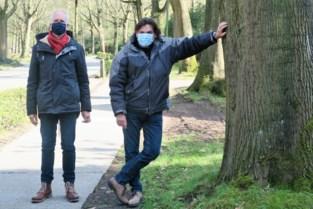 Schilde moet keuze maken: veilige fietspaden ten koste van oude eiken