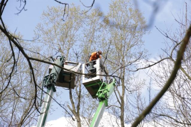 Korf van hoogtewerker breekt af: bomenvellers staan uur lang doodsangsten uit