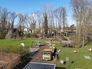 Alle slechte bomen in de Groene Long zijn verwijderd