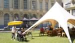 Geef je jawoord in openlucht: binnentuin in Veldstraat wordt trouwlocatie