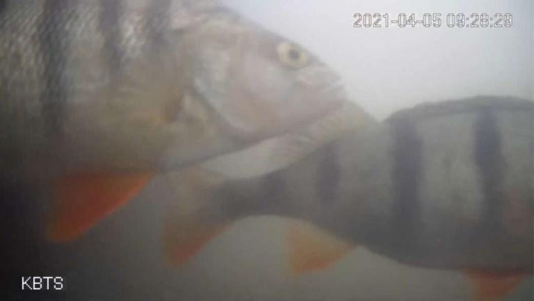 Eerste 'visdeurbel' ter wereld redt duizenden vissen van gewisse dood