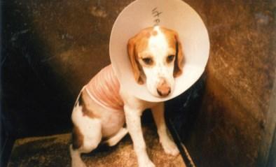 Gaia lanceert 'terugroepactie' voor Beagles: