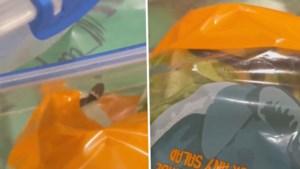 """Koppel vindt giftige slang in zakje sla van Aldi: """"Ik schrok me kapot toen ik een tong zag"""""""