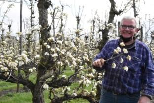 """Pajotse fruitkwekers halen opgelucht adem bij beperkte schade door late nachtvorst: """"Maar de laatste vijf jaar is het altijd wel wat"""""""