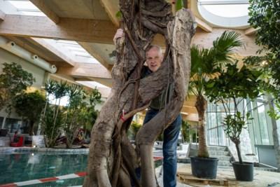 Jean redt bomen in regenwoud en geeft ze nieuwe thuis in zwembad Terhills