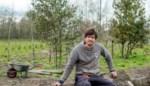 Adopteer eens een boom uit het asiel: Dries redde 2.500 bomen van de hakselaar en prepareert ze voor tweede leven