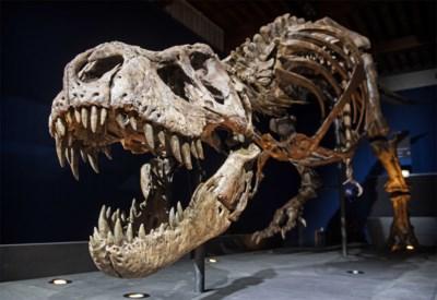 We weten meer van de T. rex dan van welke andere dino ook, maar met hoeveel waren die tirannen?