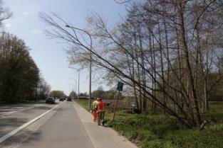 Brandweer verwijdert overhellende boom langs Grote Baan