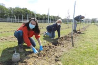 Aanplanting 2.100 druivenstokken brengt forse uitbreiding met zich mee