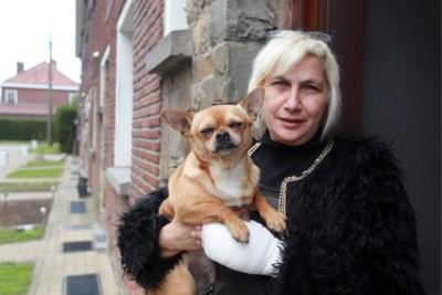 """Salvina krijgt boete omdat hond geen gordel draagt in auto: """"Kan in gevaarlijk projectiel veranderen"""""""