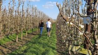 Fruitteler laat mensen mee genieten van bloesems