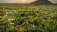 Vlaanderen zoekt Nationale Parken en Landschapsparken