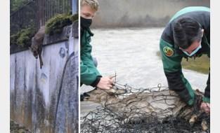 Ree zit klem in hekwerk boven spoorwegbedding: brandweer bevrijdt dier
