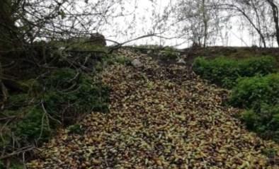Boer dumpt vier ton peren langs spoorweg in Borgloon
