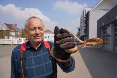 Nieuwe bewoners vinden slang tijdens werken in tuin, maar afscheidnemende brandweerman kan hen snel geruststellen
