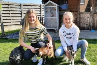 """Febe (14) en Meg (11) redden pasgeboren geitjes: """"Elke dag om 7 uur opstaan om het eerste flesje te geven"""""""