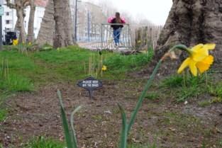 """Van hondendrollen en afval naar 'Engels' grasperkje aan Coupure: """"Brengt bewoners samen"""""""