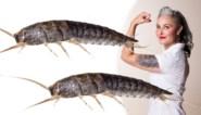 Je zag ze wellicht al eens in jouw huis kruipen: Zamarra Kok geeft vijf weetjes over zilvervisjes