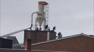 Brandweer heeft uren werk met silobrand bij meubelfabriek