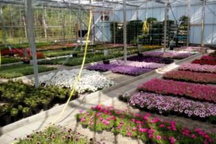 Tuinbouwafdeling Vibo De Ring kan dan toch bloemen verkopen