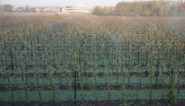 Opgelet: Deboosere waarschuwt voor gevaarlijke vrieskou