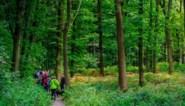 Oerbos krijgt er in een klap elf hectaren bij en wordt toegankelijker gemaakt voor fietsers en wandelaars