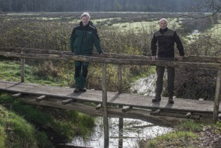 Over 22 bruggeskes door Zoniënwoud in het klein