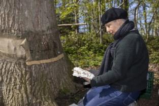 Ruim jaar geleden gaf niemand nog een cent om hun voortbestaan, nu blijken mirakelbomen gered